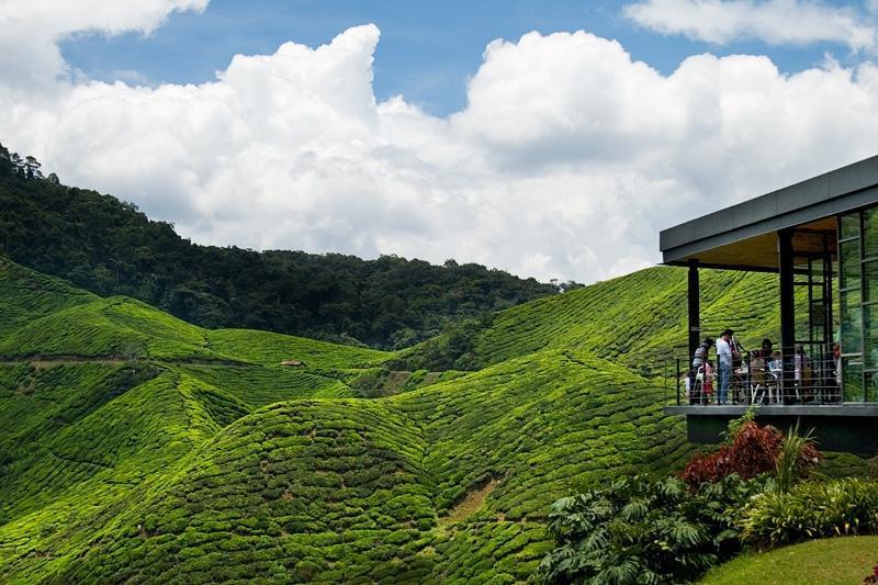 آشنایی با ارتفاعات کامرون (Cameron Highlands) در تور مالزی