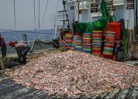 خسارت های پیدا و پنهان صیادان چینی به آب های جنوب کشور