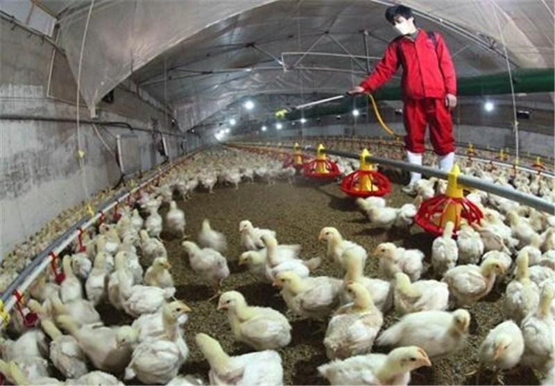 گزارش 3 مورد دیگر از ابتلا به آنفلوانزای مرغی در چین