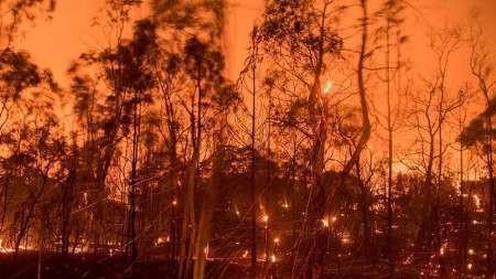 188هزار هکتار جنگل های کانادا طعمه آتش شد، 40هزار تن خانه های خود را ترک کردند