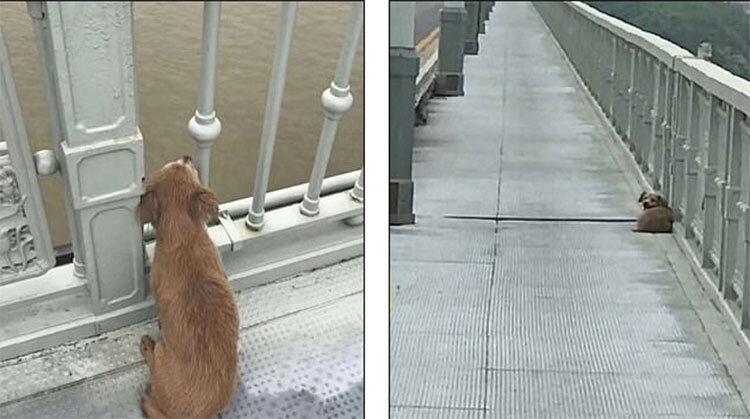 نماد وفاداری در ووهان ، یک سگ چشم انتظار صاحبی که خودکشی کرد