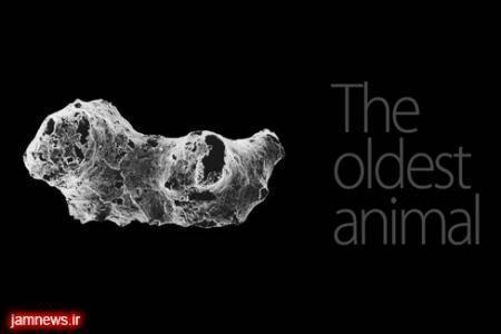 کشف قدیمی ترین جانور تاریخ حیات