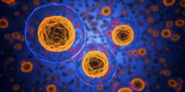 فراوری آنزیم هایی برای آنالیز فرآیند مرگ سلولی